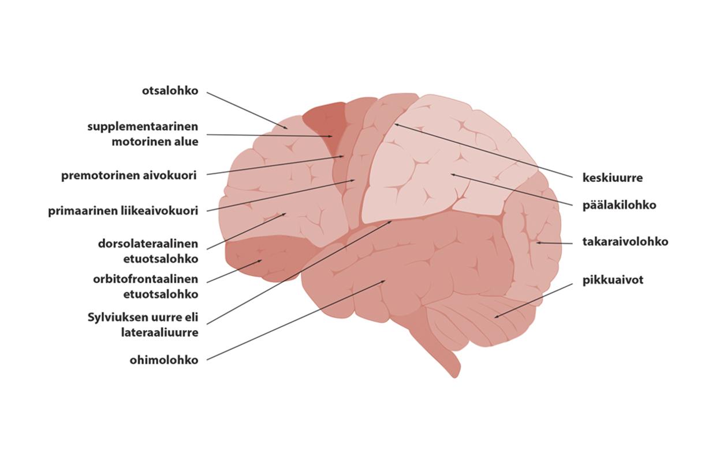 neuropsykologia